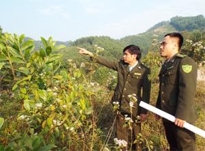 Lực lượng Kiểm lâm TP Hòa Bình triển khai phương án PCCCR mùa khô 2015-2016 tại xã Trung Minh.