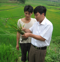 Anh Nguyễn Hồng yến, Phó Chi cục trưởng, chi cục BVTV tỉnh hướng dẫn cho bà con nông dân biết nguyên nhân và cách phòng trừ bệnh vàng là lúa.  Ảnh Thu Trang