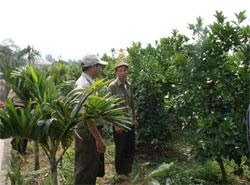 Ông Hùng thường xuyên về thăm vườn, trao đổi kinh nghiệm