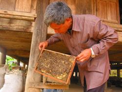 Nghề nuôi Ong được duy trì nhiều năm ở xã Lạc Sỹ (Yên Thuỷ)