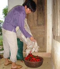 Gia đình anh Bùi Văn Hoàng ở xóm Chiềng 1(Vĩnh Đồng-Kim Bôi) chuẩn bị mang ớt đi bán.