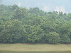 Xã Đồng Tâm quan tâm tới phát triển vốn rừng.