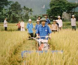 DDVTN trường Trung cấp nghề cơ điện Tây Bắc giúp đỡ gia đình chính sách xã Hưng Thi thu hoạch lúa.