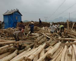 Nhiều hộ dân huyen Lạc Thuỷ đầu tư trồng rừng nguyên liệu cho thu nhập cao.