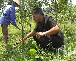 Cựu chiến binh trồng rừng bảo vệ môi trường.