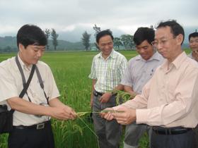 Nhờ ứng dụng KHKT vào sản xuất nông nghiệp, diện tích gieo trồng của huyện Kim Bôi luôn tăng năng suất và sản lượng.