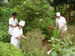 Toàn tỉnh hiện có 198 vườn thuốc tập thể