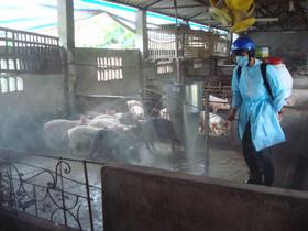 Cán bộ Trạm thú y TPHB chủ động phun thuốc khử trùng tiêu độc phòng chống dịch tại các hộ chăn nuôi.
