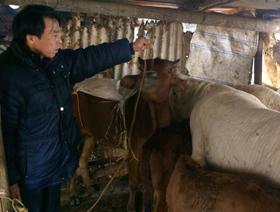 Cán bộ trạm thú y huyện Cao Phong thường xuyên xuống địa bàn kiểm tra tình hình dịch bệnh LMLM.