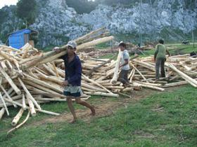 Đẩy mạnh phát triển trồng rừng đã tạo động kực phát triển kinh te ở Lạc Hưng ( Lạc Thuỷ).
