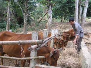Người dân xã Mường Chiềng (Đà Bắc) tích trữ thức ăn khô và che chắn chuồng trại đúng cách nhằm đảm bảo sức khỏe cho vật nuôi trong những ngày rét đạm, rét hại.