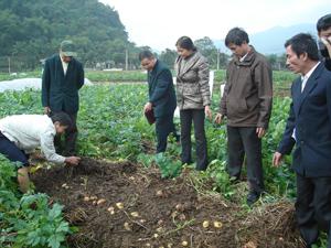 Trồng khoai tây bằng phương pháp làm đất tối thiểu giảm công lao động cho năng uất cao hơn phương pháp canh tác truyền thống