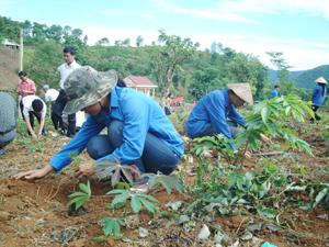 Nông dân xã Yên Thượng (Cao Phong) tích cực trồng rừng phủ xanh đất trống, đồi trọc chống xói mòn đồi.