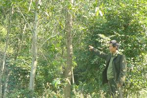 Diện tích rừng ở xã Đồng Tâm (Lạc Thủy) phát triển tốt nhờ quản lý, bảo vệ rừng được thực hiện hiệu quả.