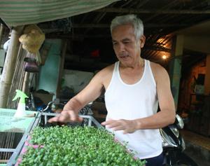 Từ ngày trồng rau mầm gia đình ông Nguyễn Văn Dũng ở tổ 1, phường Chăm Mát (thành phố Hoà Bình) được ăn rau sạch do chính tay mình làm ra.