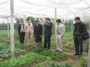 BCĐ 800 tỉnh đi kiểm tra thực tế mô hình sản xuất rau an toàn ở xã Nhuận Trạch, Lương Sơn.