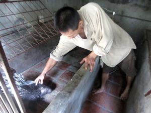 Trước khi gây nuôi, người dân cần nghiên cứu kỹ thị trường, tránh phát triển theo phong trào để có hiệu quả cao, bền vững. ảnh tại một trang trại nhím ở xóm Chùa, xã Thống Nhất (TPHB).