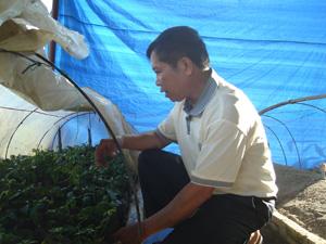 Ông Bùi Đắc Quang, xã Tu Lý (Đà Bắc) ươm giống giảo cổ lam là một trong những dược liệu quý ở vùng núi đá Hoà Bình.