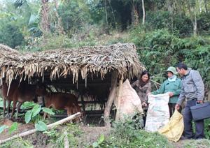 Cán bộ Thú y tỉnh, huyện hướng dẫn hộ chăn nuôi xóm Nghia, xã Lạc Sỹ (Yên Thủy) tận dụng nguyên liệu có sẵn che chắn chuồng trại cho gia súc để chống rét.