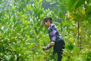 Nông dân xóm Mõ, xã Kim Sơn (Kim Bôi) chăm sóc rừng trồng năm thứ nhất.