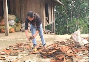 Chị Hà Thị Hậu, một điển hình về gương phụ nữ dám nghĩ, dám làm ở xã Tân Sơn (Mai Châu).