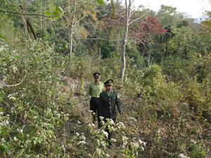 Theo kế hoạch, công tác kiểm kê rừng sẽ do Chi cục Kiểm lâm (Sở NN&PTNT) chủ trì, phối hợp thực hiện (Ảnh: cán bộ Hạt Kiểm lâm huyện Lạc Sơn bám sát địa bàn để thực hiện tốt việc bảo vệ diện rừng trên địa bàn).