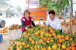Hộ kinh doanh cam ở khu 2, thị trấn Cao Phong (Cao Phong) chuẩn bị cam V2 để gửi cho khách hàng ở Hà Nội. ảnh: c.l