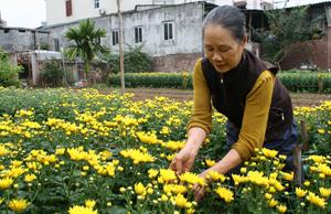 Người dân làng hoa Tân Lập 2, xã Trung Minh (TPHB) chăm sóc hoa phục vụ Tết nguyên đán.