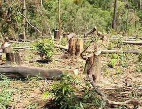 Phá rừng một trong những nguyên nhân của biến đổi khí hậu