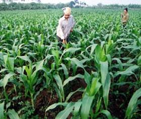 Chính phủ mới đây đã phê duyệt Đề án Phát triển giống cây nông, lâm nghiệp, giống vật nuôi và giống thuỷ sản đến năm 2020.