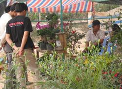 Đi chợ hoa xuân