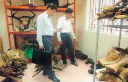 Kho bảo quản mẫu vật Bảo tàng Thiên nhiên Việt Nam.