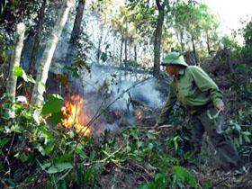 Nhiều diện tích rừng của tỉnh đang ở mức nguy cơ cháy cấp IV