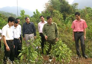 Đồng chí Hoàng Việt Cường, Bí thư Tỉnh ủy, Chủ tịch HĐND tỉnh thăm vườn ươm thực nghiệm  của Trung tâm Giống cây trồng Hòa Bình.