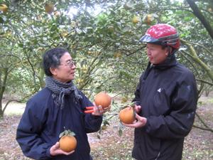 Ông Tạ Đình Đào say sưa giới thiệu giống cam mới