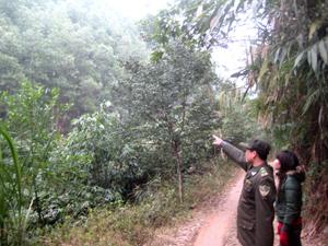 Lực lượng kiểm lâm địa bàn xã Trung Minh (TPHB) thường xuyên theo dõi, nắm bắt diễn biến rừng.