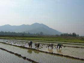 Nông dân xã Trung Bì (Kim Bôi) tập trung sản xuất vụ Chiêm - Xuân.