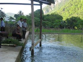 Gia đình ông Hà Văn Chung có 1000 m2 diện tích ao nuôi cá dầm xanh cho thu nhập cao.
