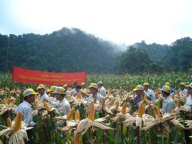 Các mô hình trồng ngô năng suất cao được nhân dân các địa phương đón nhận.