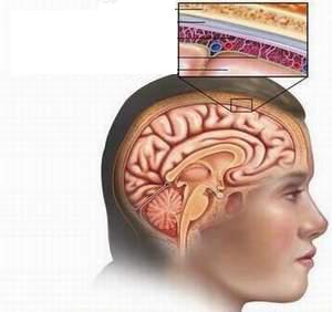 Cấu trúc màng não.