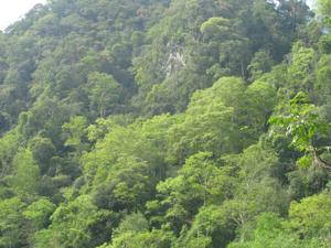 Một góc rừng Ngọc Sơn – Ngổ Luông.