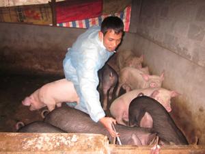 Thú y cơ sở xã Thống Nhất tiêm thuốc điều trị đàn lợn mắc LMLM ở xóm Rậm.