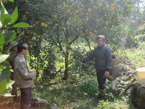 Ông Nguyễn Xuân Thanh hướng dẫn kỹ thuật trồng cam cho các hội viên nông dân trong xóm.