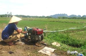 Ứng phó với hạn hán đầu vụ, nông dân xã Ngọc Lương (Yên Thuỷ) sử dụng máy bơm dã chiến để bơm nước vào ruộng cứu lúa.