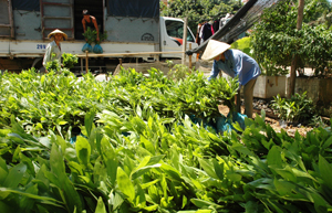 Huyện Lạc Thủy chủ động cây giống phục vụ trồng rừng vụ xuân 2014.