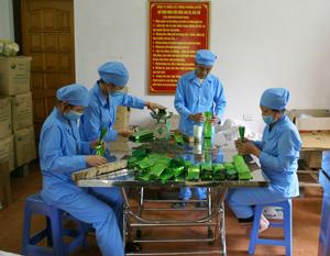 Sản phẩm chè của Công ty Phương Huyền được đóng gói theo quy trình kỹ thuật.