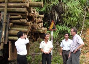 Nhóm khai thác lâm nghiệp xóm Nà Chiếu, xã Cao Sơn (Đà Bắc) đảm nhiệm việc tổ chức thu mua, khai thác, kết nối thị trường giúp đảm bảo lợi nhuận của các thành viên và nông dân.