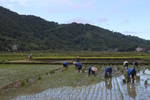 Nông dân xã Vĩnh Đồng (Kim Bôi) nô nức xuống đồng.