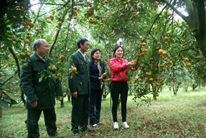 Huyện Cao Phong hiện có 1.336 mô hình trang trại, vườn rừng do CCB làm chủ mang lại hiệu quả kinh tế cao. Ảnh: Lãnh đạo Hội CCB huyện Cao Phong thăm mô hình trồng cam của CCB Nguyễn Thị Thanh ở TT Cao Phong.