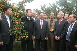 Chủ tịch nước Trương Tấn Sang và các đồng chí lãnh đạo tỉnh thăm vùng cam hàng hóa Cao Phong. Ảnh PV.